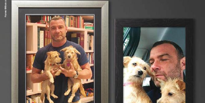 Liev Schreiber: Adopt!