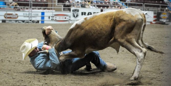 Video: Cowboy Crushed to Death by Bull He Chose to Torment