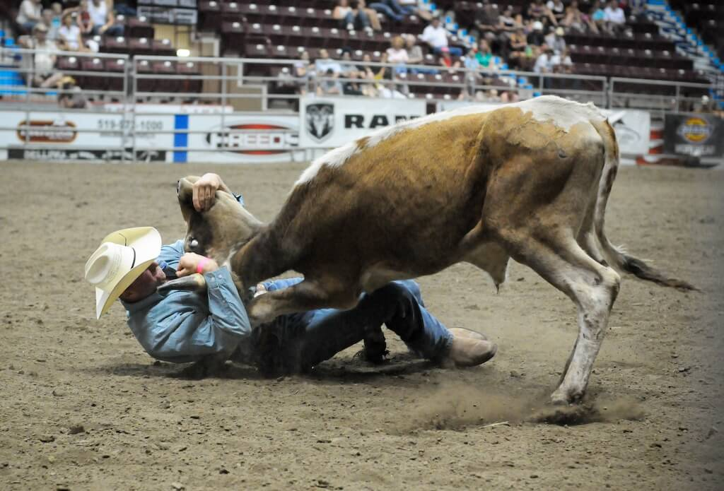 Video Cowboy Crushed To Death By Bull He Chose To Torment