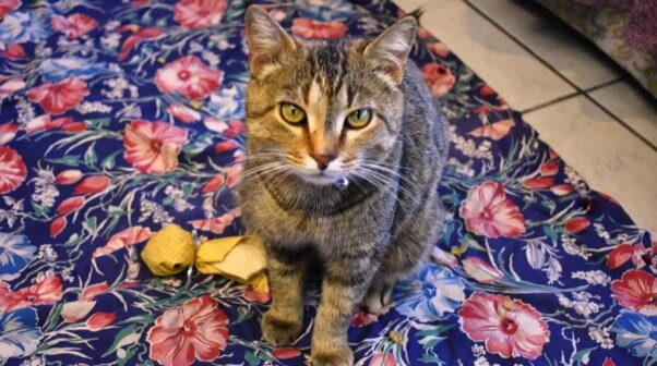 Pretty brown tabby cat sitting on floral rug