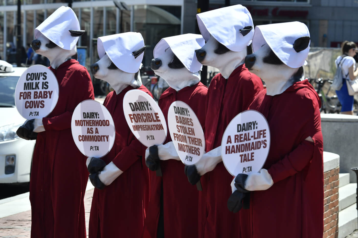 Peta Exposes Parallels Between The Handmaids Tale And Dairy