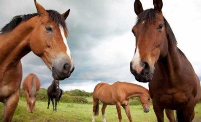 New York Passes Anti-Horse Slaughter Bill