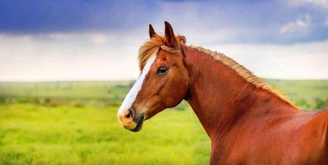 Montréal Moves to Ban Archaic Horse-Drawn Carriages