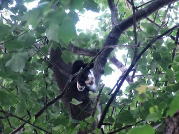 Cat stuck in tree photographed from below