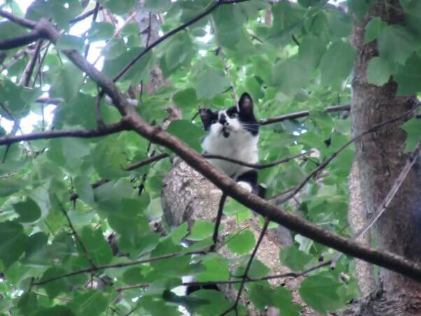 Cat named Tarzan stuck in a tree before being rescued by PETA