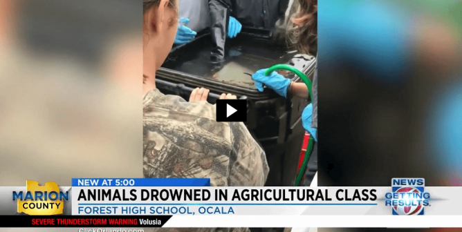 Teacher Reportedly Drowns Animals; PETA Urges No More FFA Cruelty