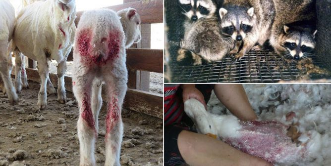 Burberry Is Setting Fire to Items That Cost Animals Their Lives