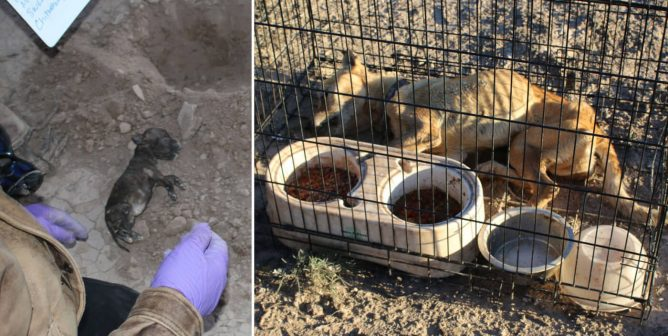 EXPOSED: Gruesome Crime-Scene Photos From a Self-Professed 'Animal Rescue'