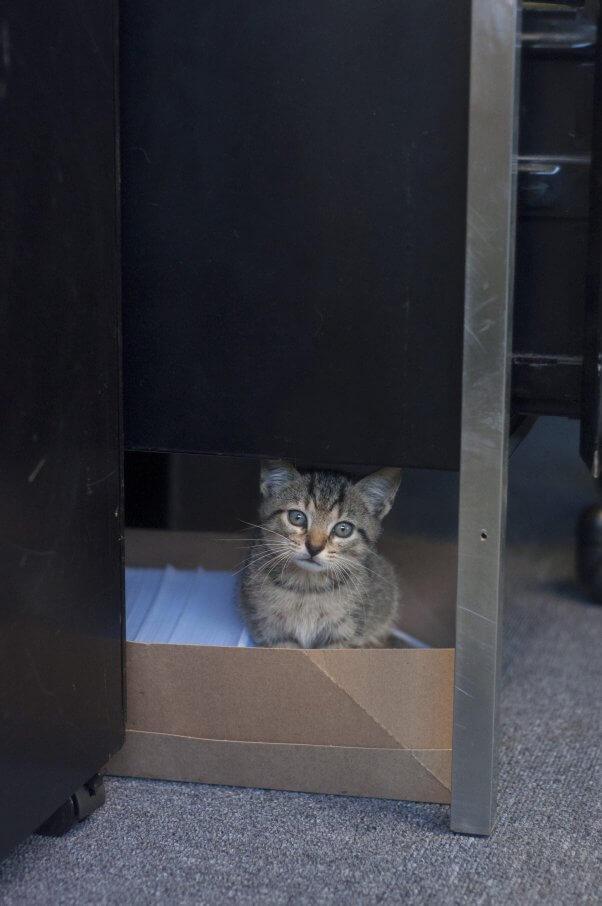 Cute tabby kitten in box under desk
