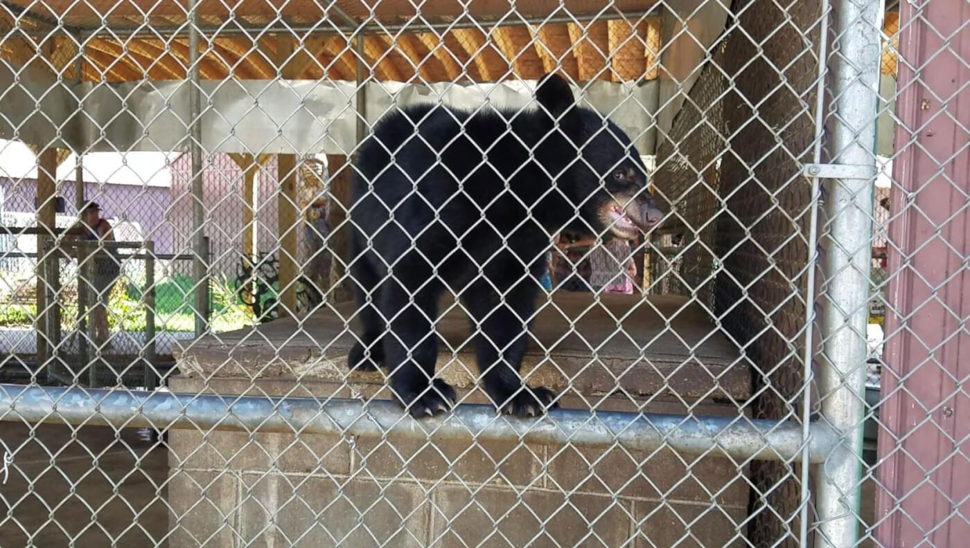 photo of bear cub biting cage