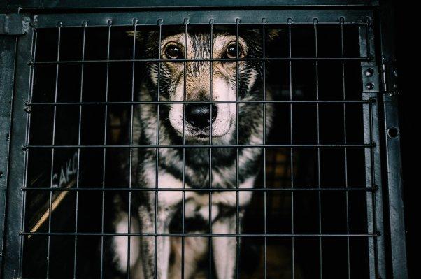 Sad dog in crate