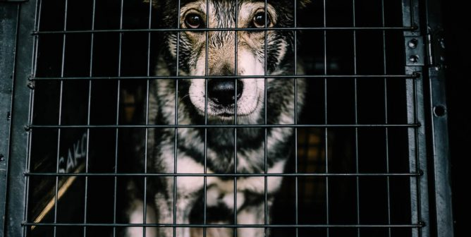 Is Your Dog a Prisoner in Her Own Home?