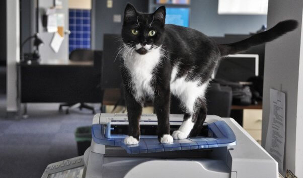 Handsome black and white cat standing on top of copy machine
