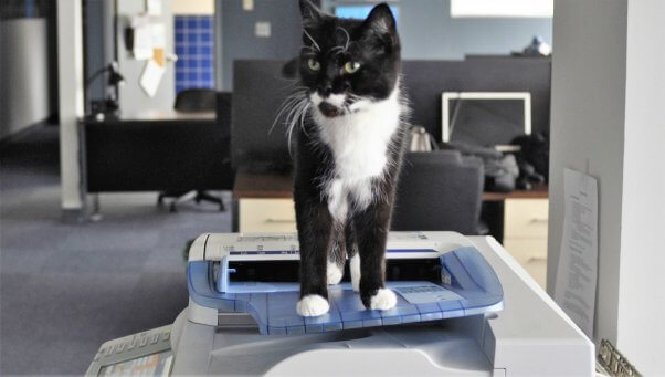 Cute black and white cat standing on copy machine