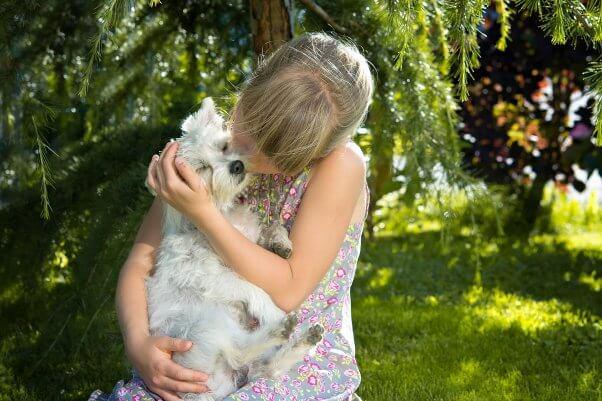 Little girl kissing small white dog