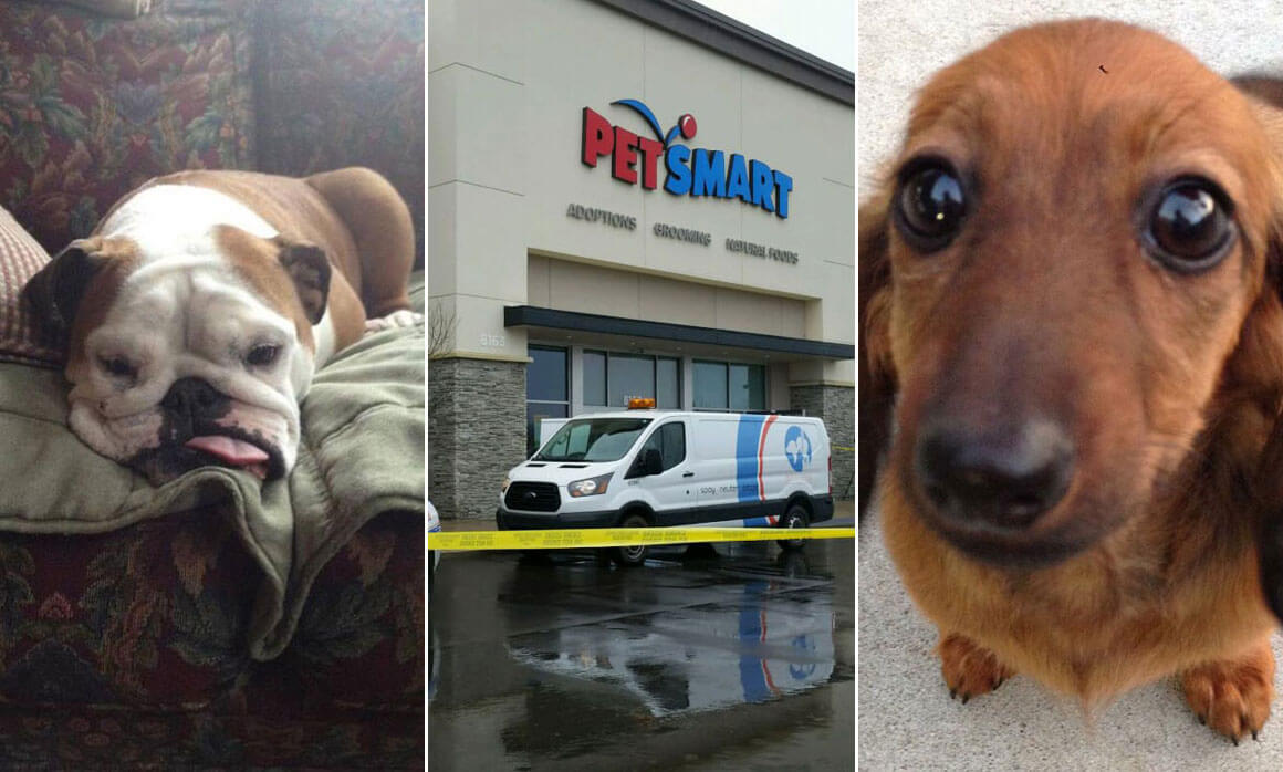 Dog Dies Guardian Heartbroken After Incident At Petsmart Peta