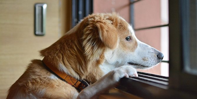 Are You Spending Enough Time With Your Dog?