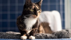 TeachKind Rescue Stories: Florence the Cat Survives a Flood
