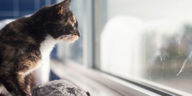 Why You Should Treat Your Cat Like a Dog