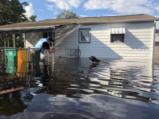 dog rescued from flooded yard