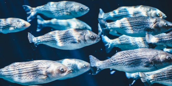 Save the Fish: Swimming Creatures Deserve Our Sympathy and Protection