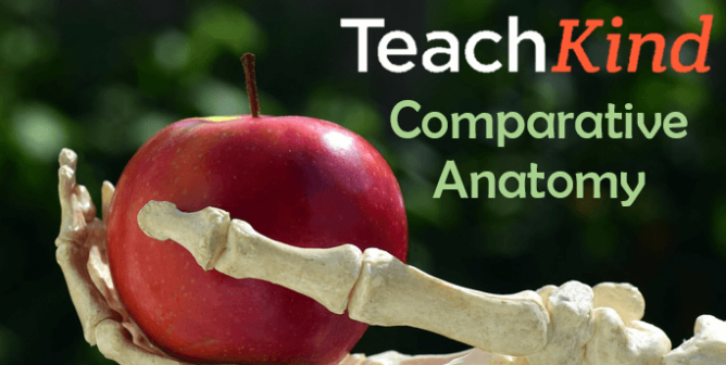 Study Skeletons This Halloween With TeachKind's Comparative Anatomy Lesson