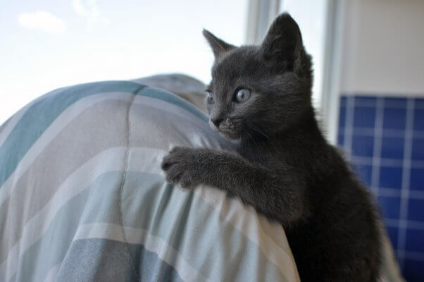 PETA-rescued kitten who's looking for a home