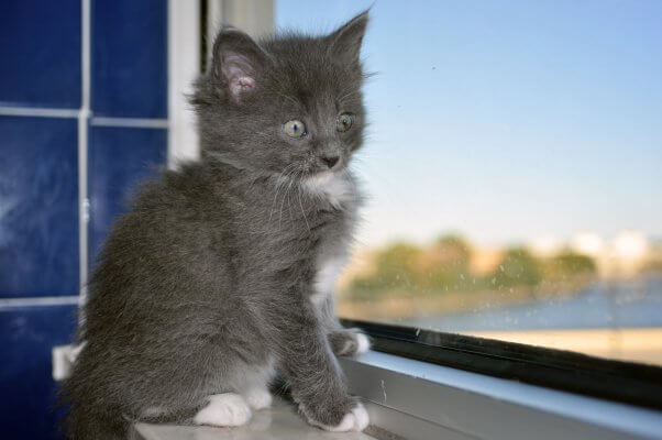 Cute fluffy kitten available for adoption