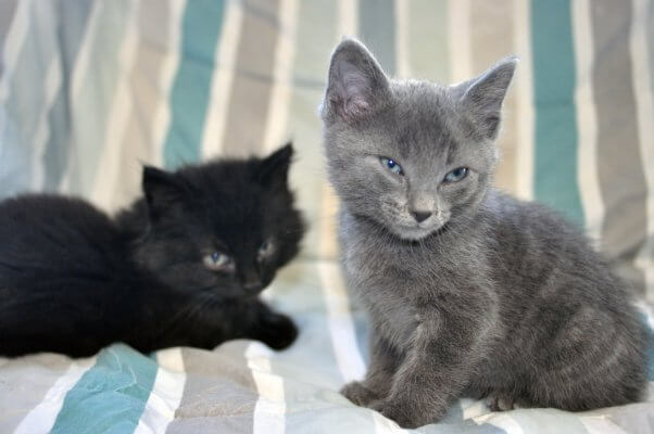 Kittens rescued by PETA and looking for a home