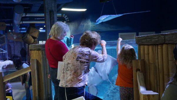 stingway at seaquest aquarium