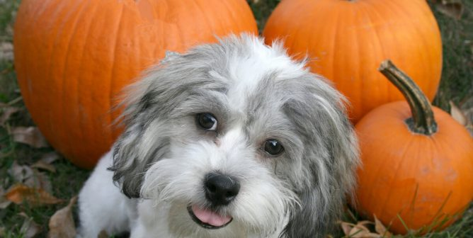 Keep Your Animals Safe and Happy This Halloween