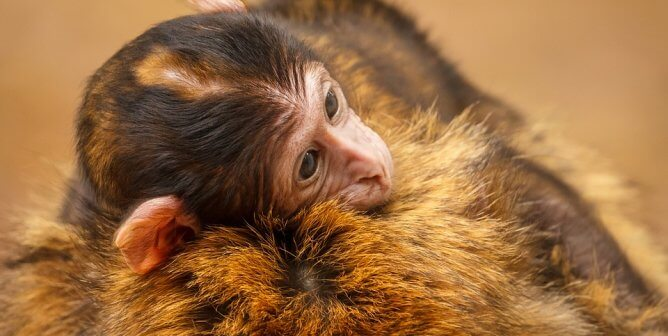PETA Calls for Shutdown of Louisiana Lab After Monkey's Escape