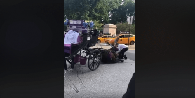 VIDEO: Horse Pulling Carriage Collapses Amid Heavy NYC Traffic—When Will This Abuse End?