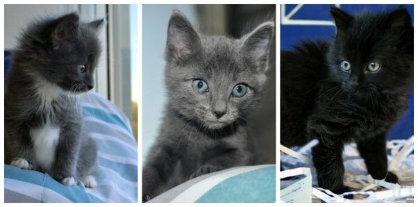 These PETA-rescued kittens are available for adoption