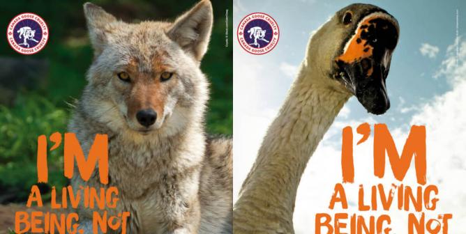 PETA Takes Action After Anti–Canada Goose Ads Taken Down