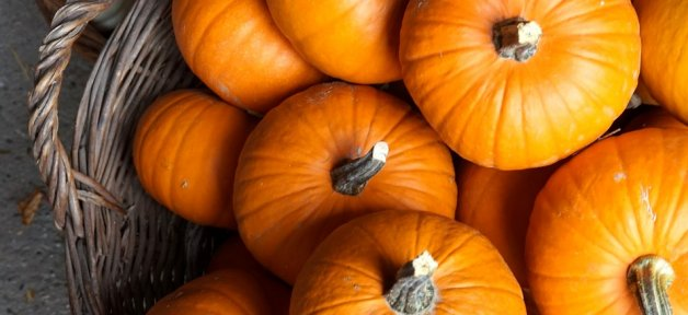 a pile of small orange pumpkins in a basket for halloween