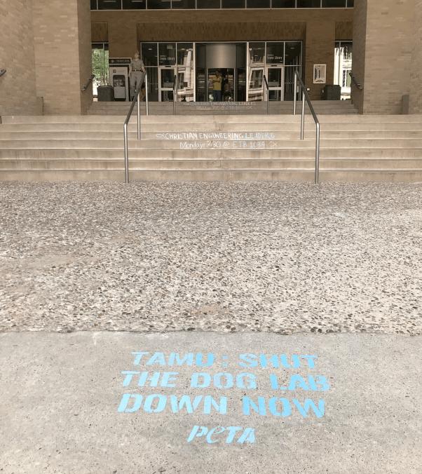 matt bruce texas A&M sidewalk chalk message
