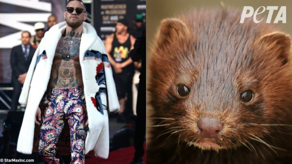 who wore it better? celebs vs. animals
