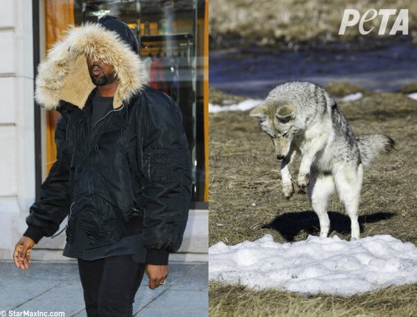 who wore it better? celebs or animals in fur
