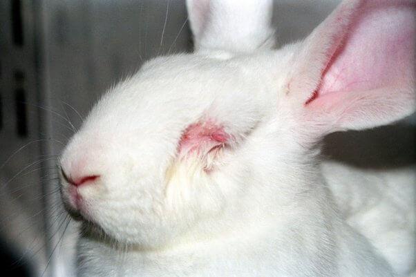 EU animal testing ban peta open letter