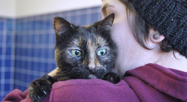 Rescued senior cat Pumpkin being held by PETA staffer
