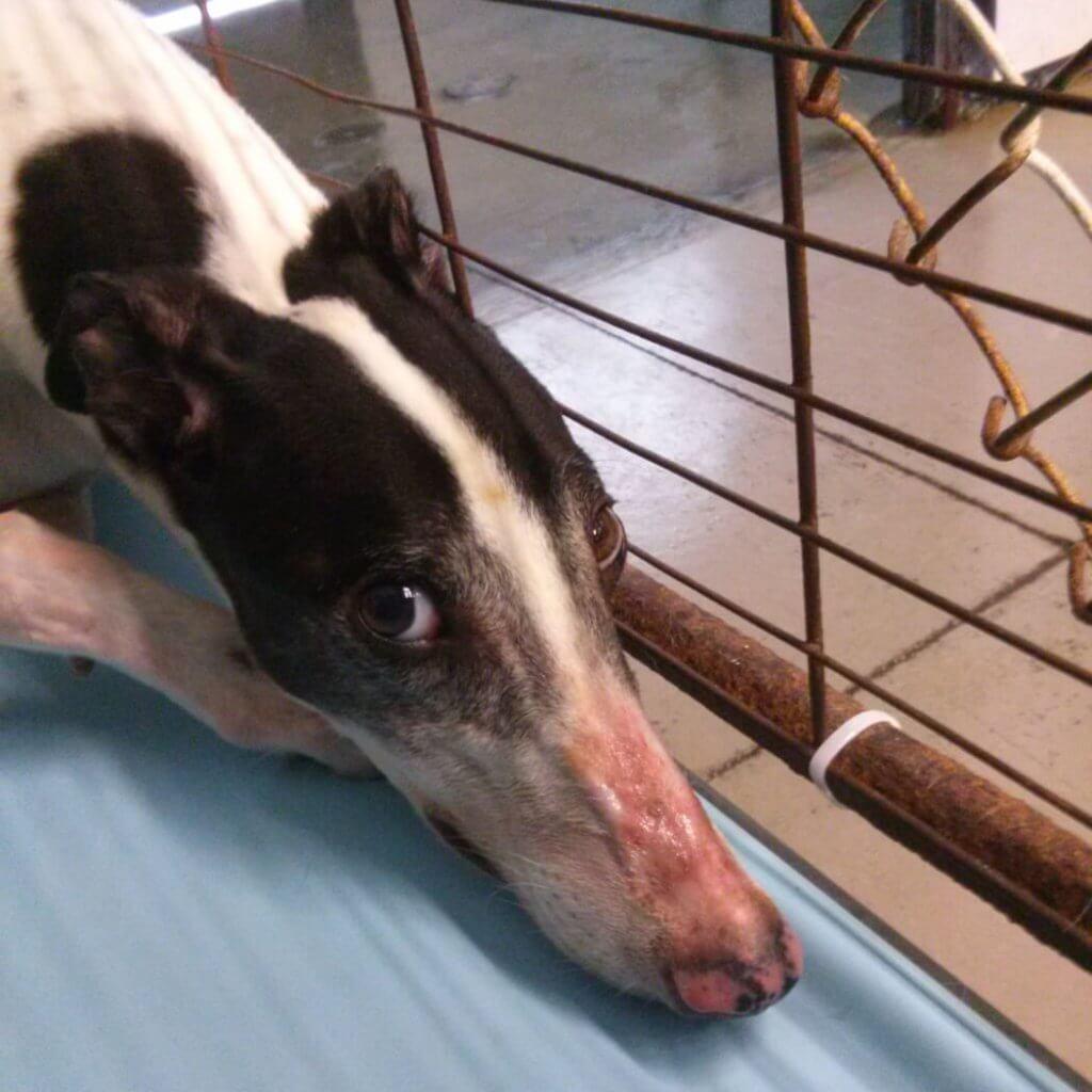 PETA exposes Hemopet
