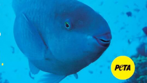 I'm Me, Not Meat (Blue Fish)
