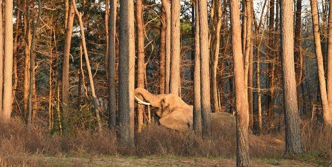 Nosey, The Elephant Sanctuary