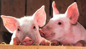 10 PETA Pledges and Action Alerts Perfect for 'World Kindness Day'