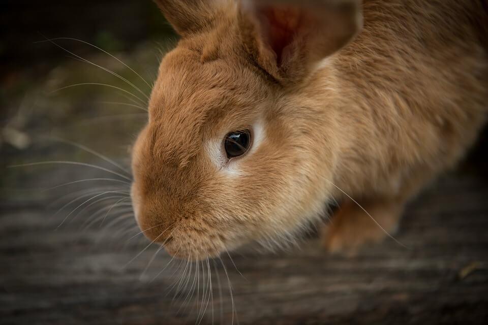is your rabbit sick