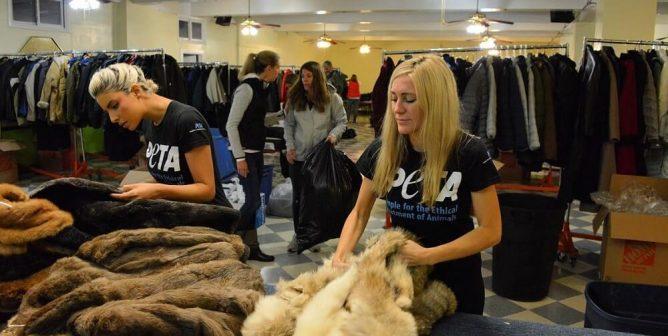 PETA Fur Coat Donation Program. PETA employees boxing up coats