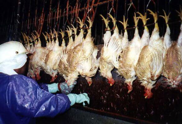 covid-19 slaughterhouse concerns