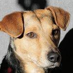 Close-up of brown mixed-breed dog