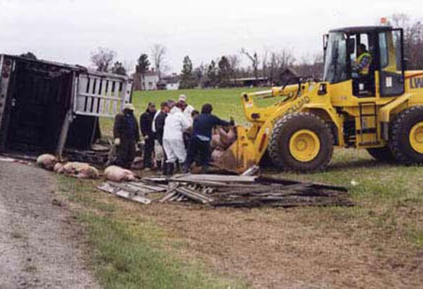 Smithfield's Truck Accidents: Pigs Pay the Price | PETA